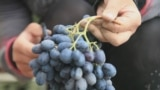 Uncorking Uzbekistan's Wine Business grab