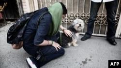 از دادستان شاهینشهر نقل شده که این دادستان بدون اغماض با نگهداری سگهای خانگی برخورد میکند