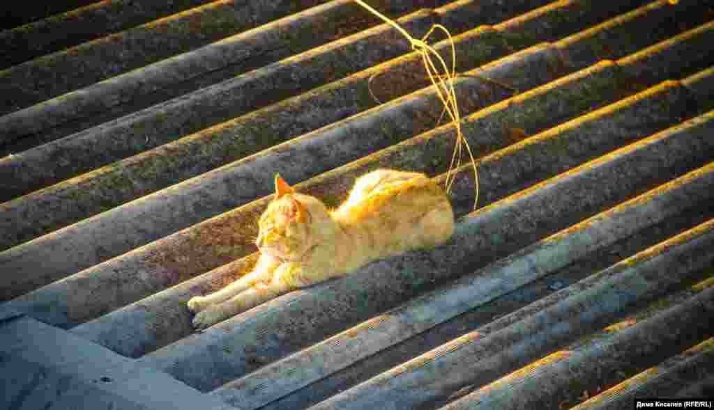 Солнечная ванна для кота. Этот феодосийский рыжик уютно устроился на крыше дома
