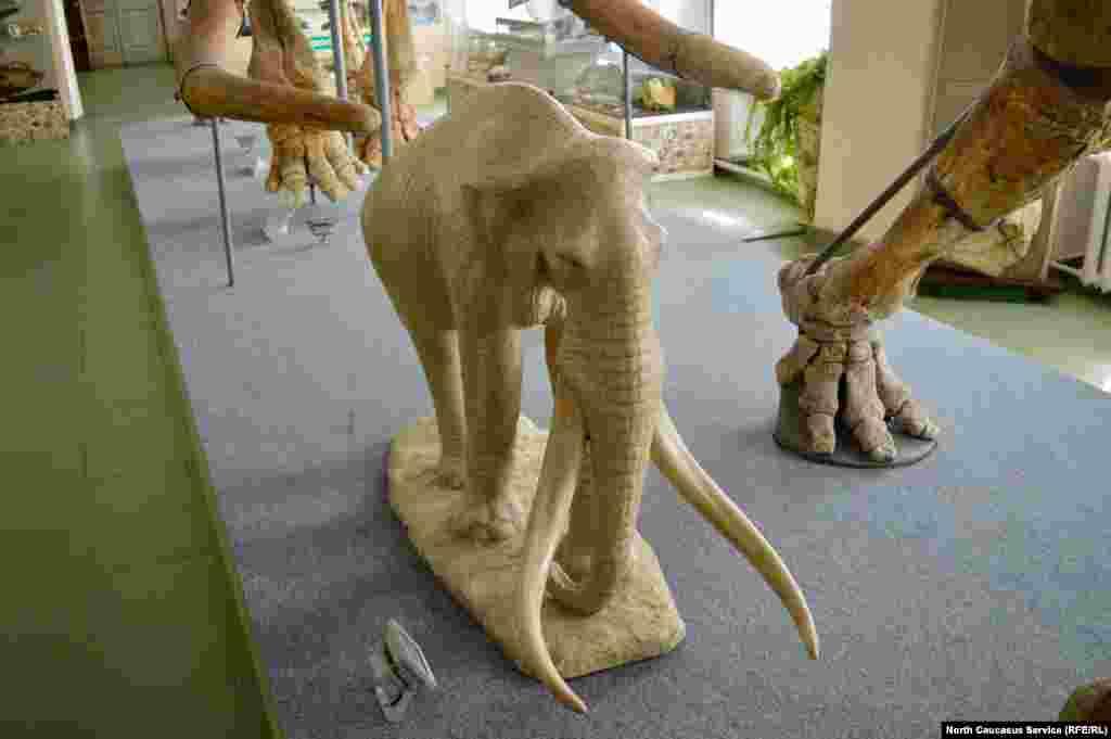 Ученые не могут сказать точно, была ли у Южного слона шерсть, как у мамонта. Зато его бивни достигали 4 метров в длину и были завинчены, как и у его потомков