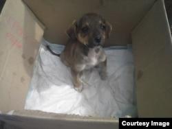 Этого щенка выбросили в коробке на улицу. Фото из форума сочинских зоозащитников