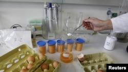 Камчатка. Яйца под подозрением