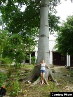 У сейбы, магического дерева индейцев майя