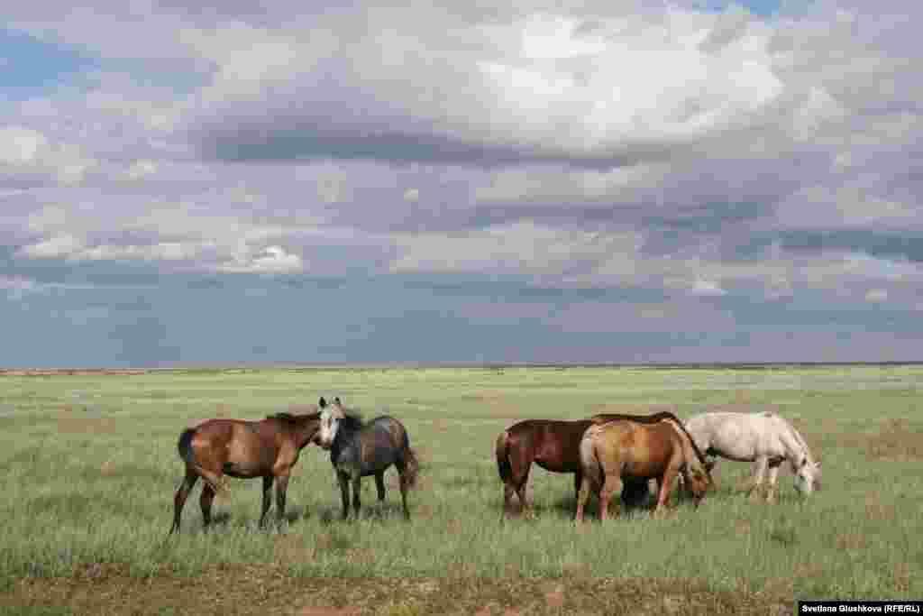 Жители зарабатывают себе на жизнь скотоводством.