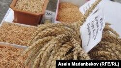 Кыргызстанское зерно.