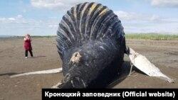 Погибший на Камчатке кит