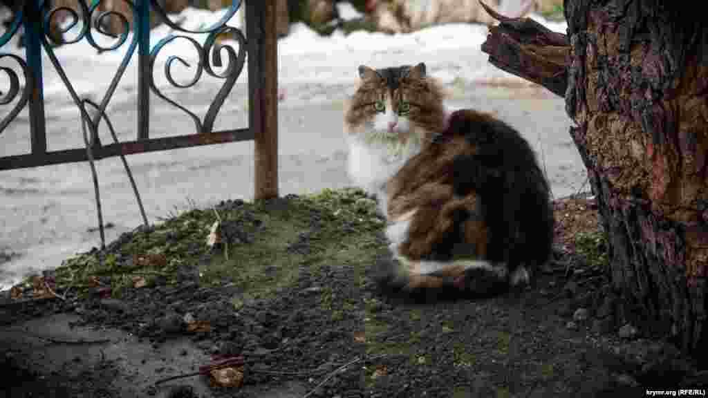 Этот обитатель Симферополя недоумевал, почему в марте еще не наступило долгожданное тепло