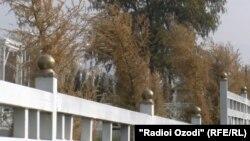 В новом сквере Куляба засохли вечнозеленые деревья