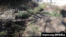 В Ялте на набережной снесли бамбуковую рощу под организацию шахматной аллеи