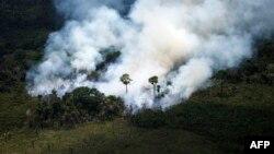 Amazon u plamenu