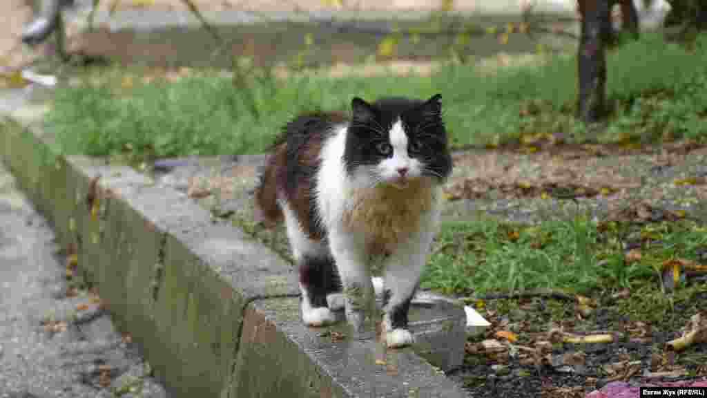 Суровый уличный кот дождя не боится