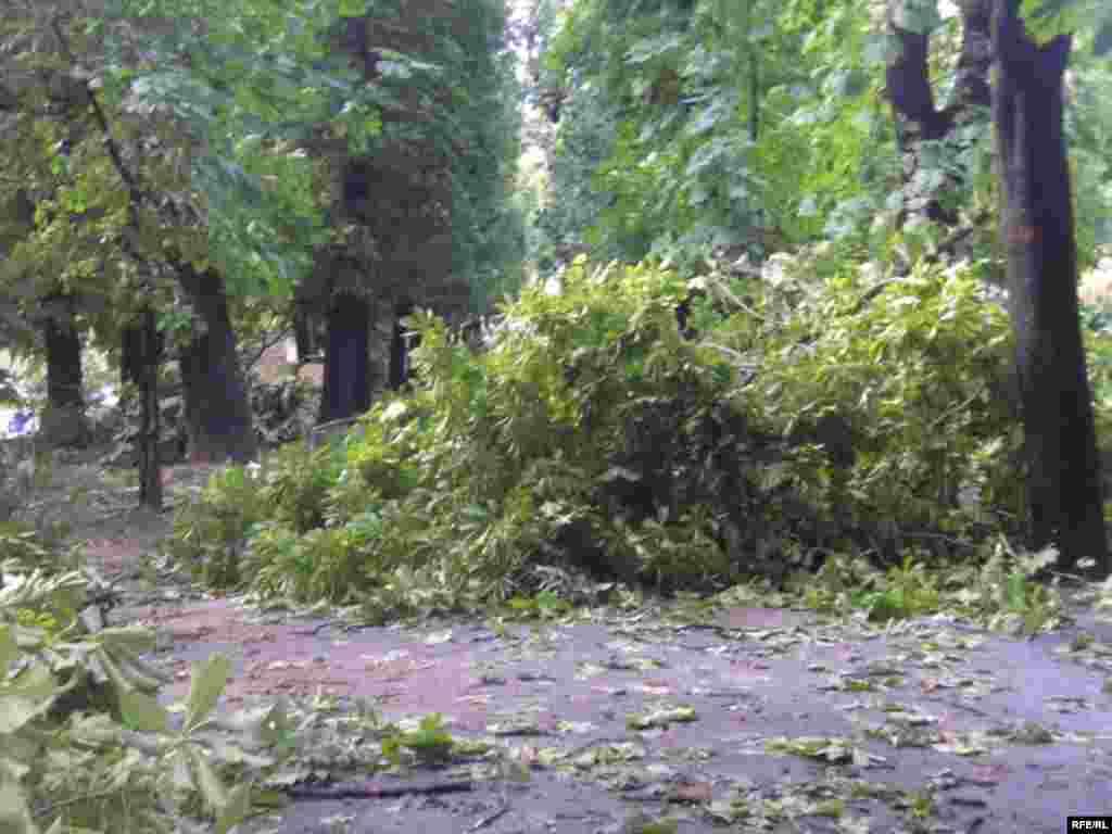 Наслідки буревію у Львові 23 червня 2008 р. - Наслідки буревію у Львові 23 червня 2008 р.
