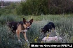 Собаки на опустевших улицах
