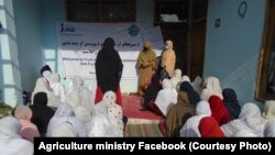جریان آموزش زنان در قسمت پروسس و بسته بندی میوه و سبزی در ولایت ننگرهار