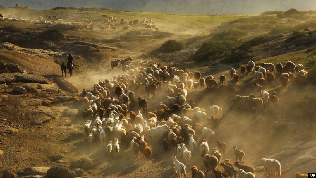 Казахи, перегоняющие скот в округе Алтай в Китае. Иллюстративное фото.