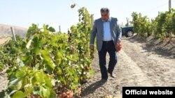 Президент Эмомали Рахмон Хорасан (Хуросон) районундагы жүзүмзарга барган учур. 1-октябр, 2017-жыл.