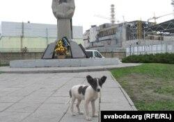 Чарнобыльскі сабачка