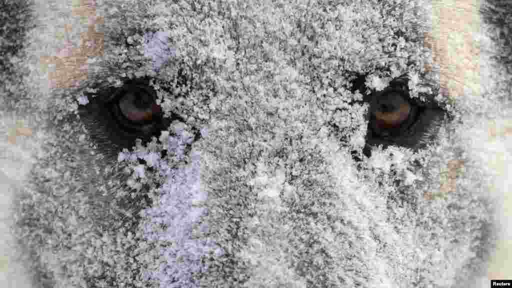 Rusija - Prvi snijeg pao je u sibirskom Krasnojarsku, 4. decembar 2012. Foto: REUTERS / Ilya Naymushin