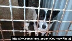 Собаки в отлове ЦВСЖ находились в ужасных условиях