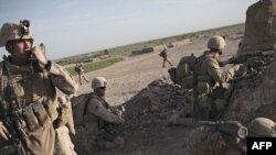U.S. Marines in a poppy-growing area in Marjah in Helmand Province