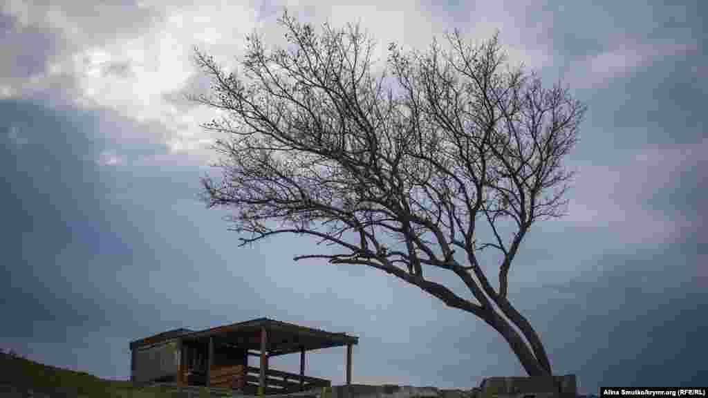 Ветер гнет дерево в Судаке