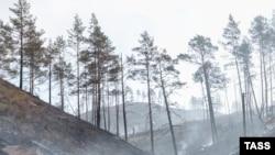 Леса Бурятии, архивное фото