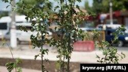 Туркиядан импорт қилинган 23 200 дона олма кўчатида «Бўртма нематода» зарарли организми мавжудлиги аниқланган.