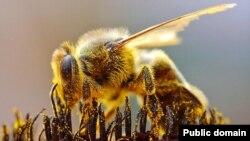 В США продолжается массовая гибель пчел
