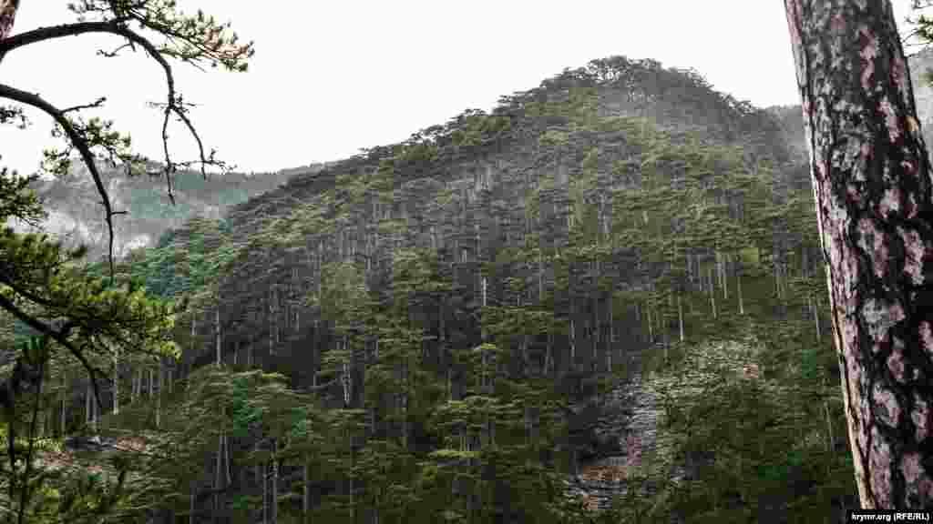 Заповедный лес в ущелье Уч-Кош, что на границе Ялтинского и Крымского природных заповедников, до пожара