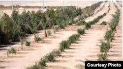 مشروع لزراعة حزام أخضر في الكوت