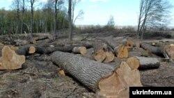 Кругова порука знищує ліси. Як це зупинити?