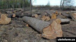 Одне дерево може коштувати до 12 тисяч гривень