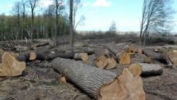 Чи збереже Україна свої ліси?
