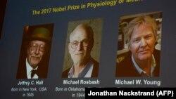 Лауреаты Нобелевской премии по медицине 2017 года (слева направо) Джеффри Холл, Майкл Росбаш, Майкл Янг