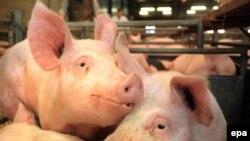 """Вспышка свиного гриппа сыграла на руку биржевым """"медведям"""""""