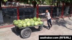 Türkmenistanda araba sürüp gazanç edýän çagalaryň biri.
