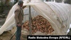Производител на кромид покажува скапан непродаден кромид во селото Бела Црква во близина на Прилеп.