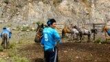 Играть в кок бору можно с 18 лет и до любого возраста, пока всадник чувствует в себе силы и ловкость держаться в седле и поднимать тушу козла, вес которого в среднем составляет 30 килограммов