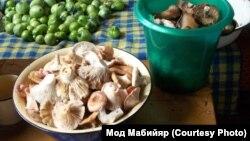 Грузди - любимые грибы сибиряков