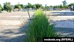 Лінія травы — траекторыя кулі, якая забіла Гектара Пэтэрсана — 12-гадовага ўдзельніка антыўрадавых пратэстаў