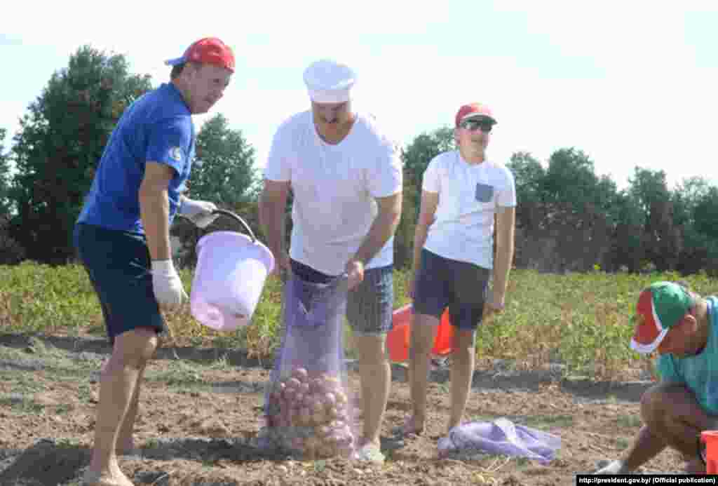 Lukashenka and Kolya harvest potatoes at the presidential residence in Drozdy, near Minsk, in August.