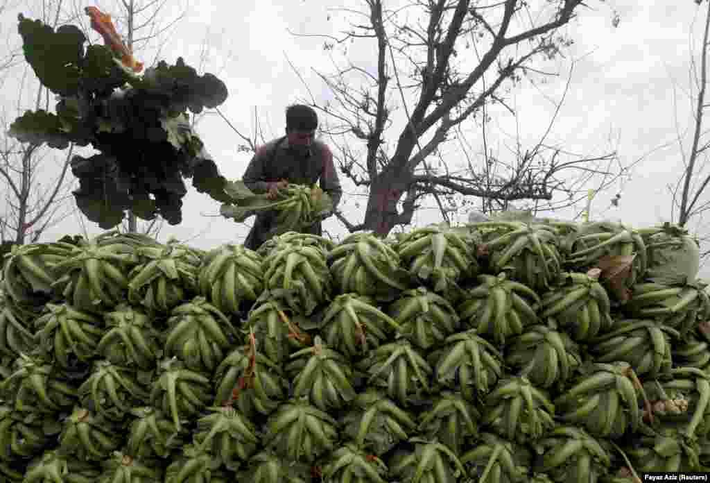 Работнік на фэрме складае капусту непадалёк ад Пэшавару, Пакістан.