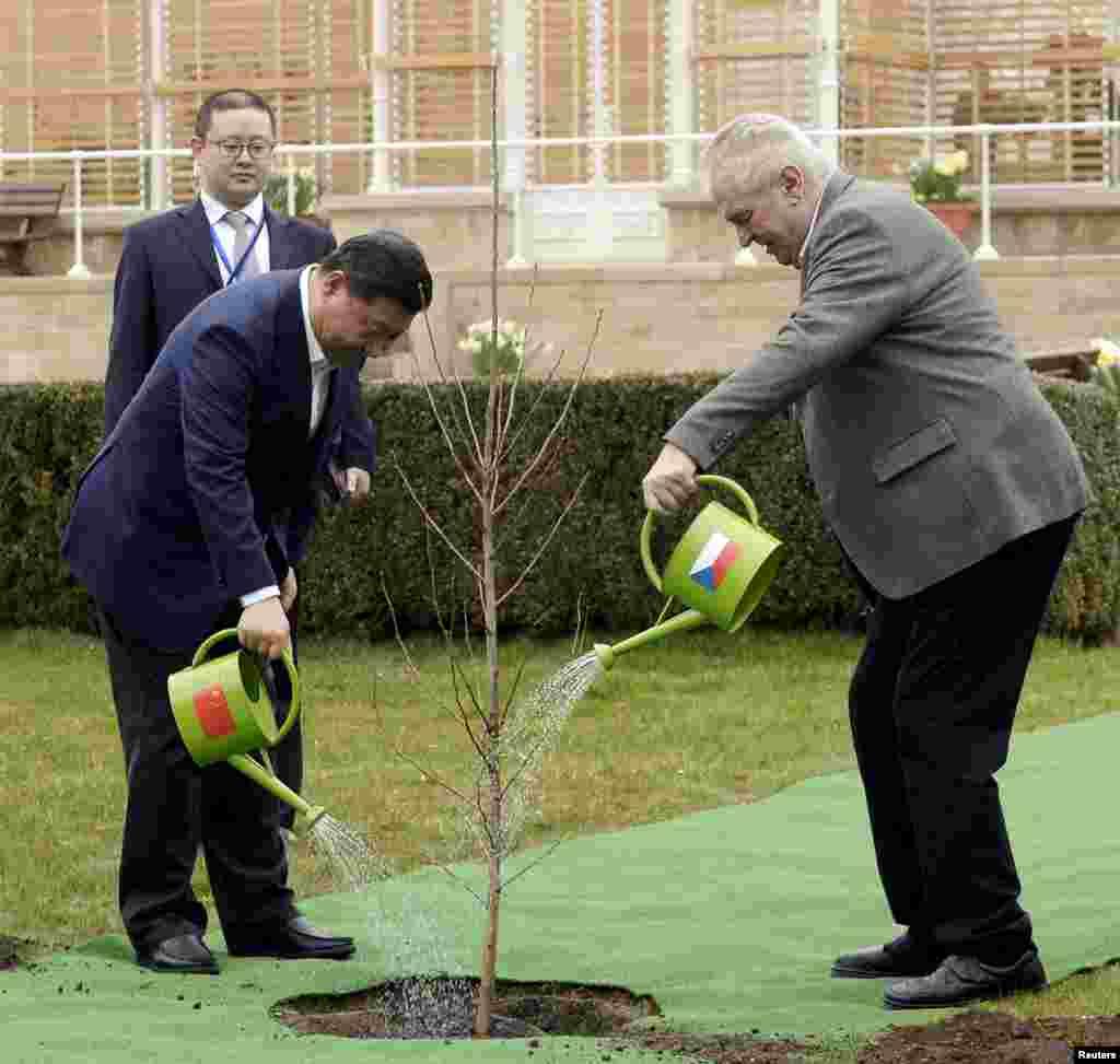 Си Цзиньпин и Милош Земан вместе поливают дерево, высаженное на территории замка в местечке Ланы