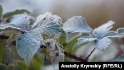 Перший іній на зелених кущах: морозний ранок у кримській Грушівці (фотогалерея)