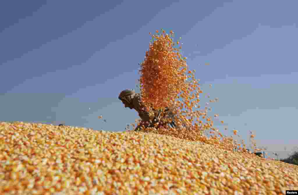 A worker spreads out corn to dry after harvesting them from the cobs before selling them at a market in Lahore, Pakistan. (Reuters/Mohsin Raza)