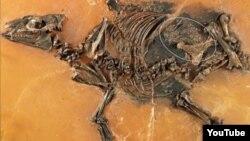 فسیل اسب اولیه کشف شده و جنین آن