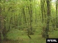 چوب حراج به جنگل هاى ايران
