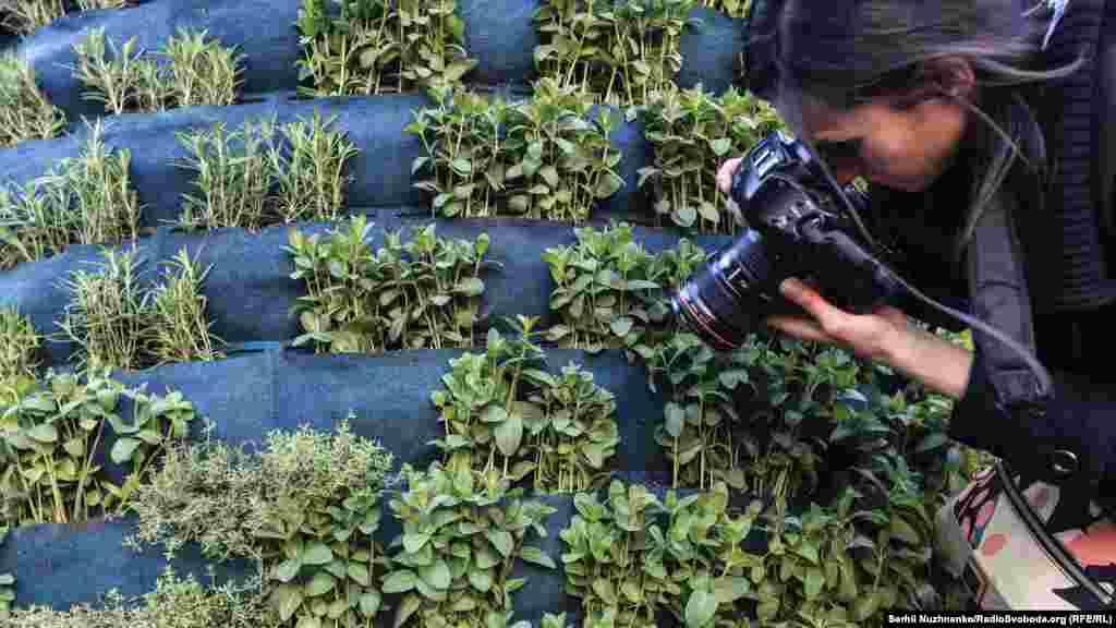 Наприкінці проекту рослини будуть роздані всім охочим