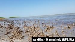 Берег Малого Арала у села Боген. Кызылординская область, 22 июля 2018 года.