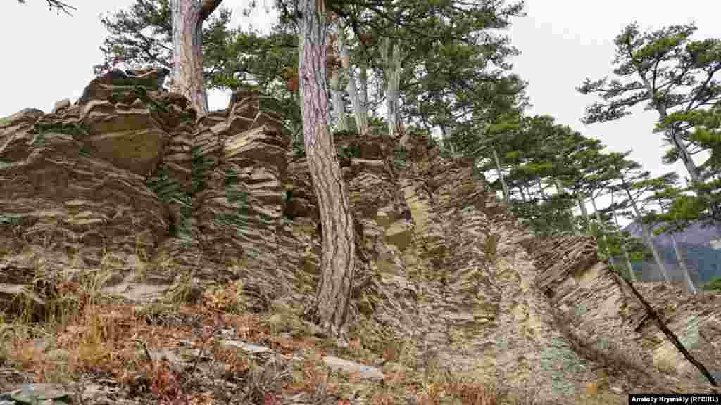 Каменистая почва крымской сосне –не помеха